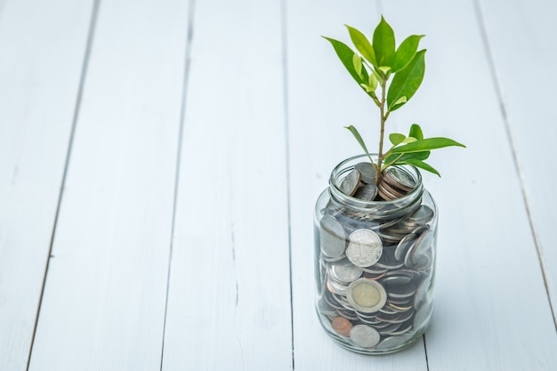 Het symbool van de geldgroei, de jonge boomplant in de glazen fles met munten