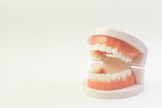 Het tandmodel op witte achtergrond voor tandinhoud.