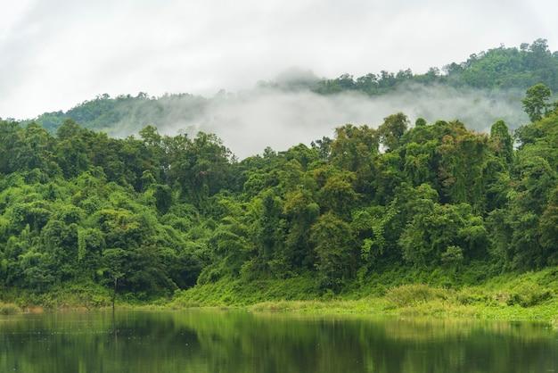 Het tropische bergenbos in thailand