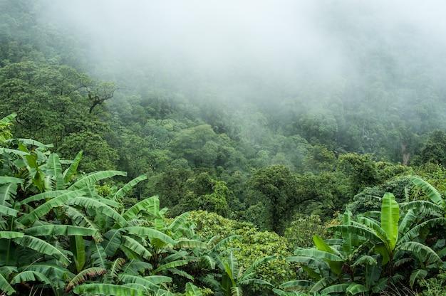 Het tropische regenwoud op regenachtig in de ochtend.