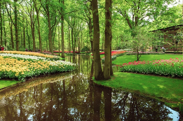 Het tulpenveld in nederland of holland