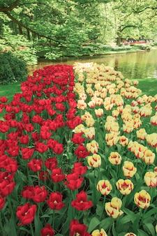 Het tulpenveld in nederland