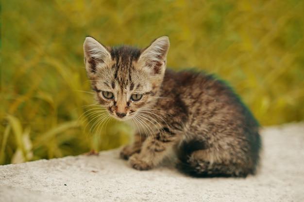 Het verdwaalde kitten. de tabby is alleen op straat, hongerig en eenzaam.