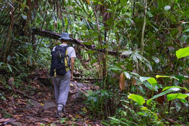 Het verkennen van het regenwoud van borneo