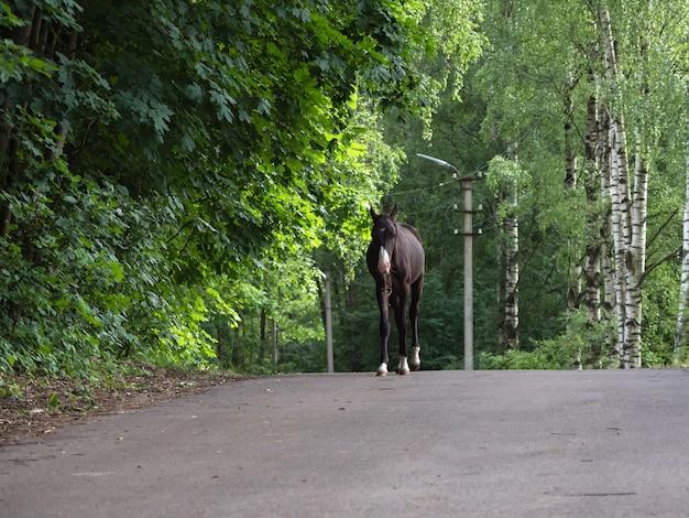 Het veulen is op de weg. fokpaarden op de boerderij.