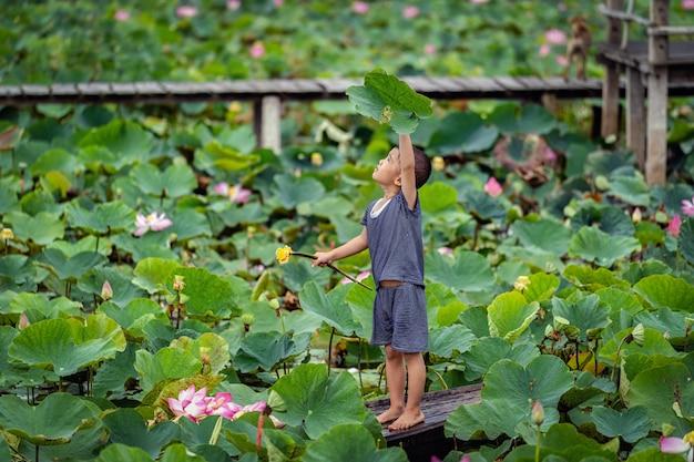 Het vietnamese jongen spelen met de roze lotusbloem over de traditionele houten boot in het grote meer