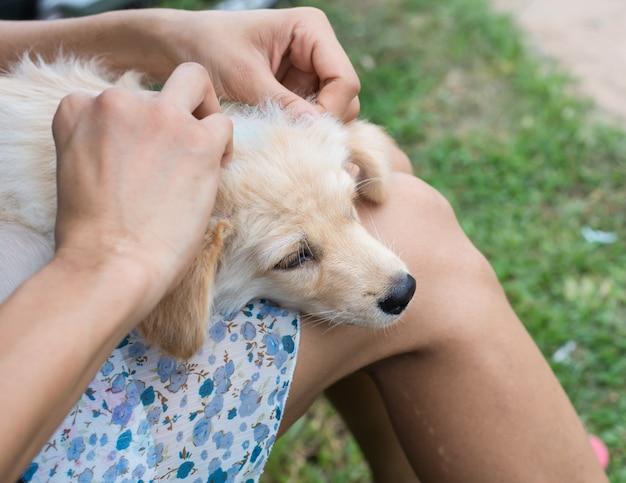 Een aap die vlooien en teken in de hond controleert | Premium Foto