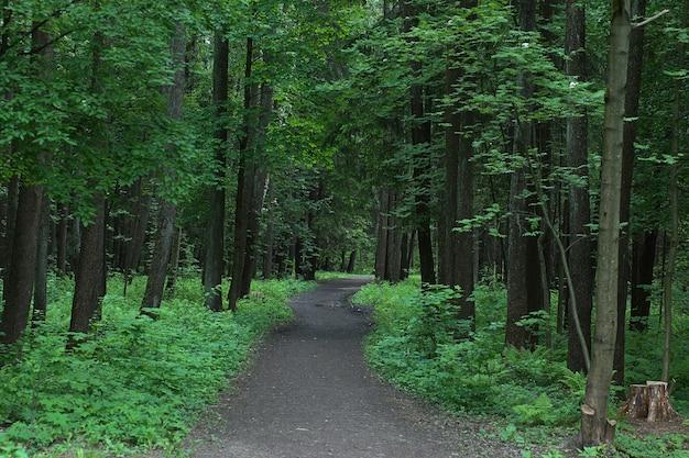 Het voetpad gaat op een zomerse dag de diepte van het park in, omringd door bomen met groen gebladerte.