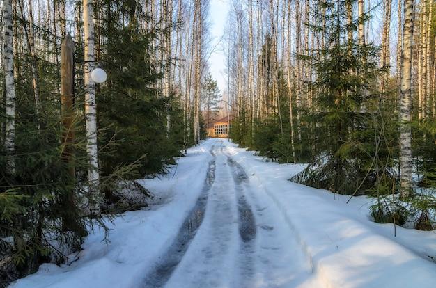 Het vroege voorjaar in het russische woud