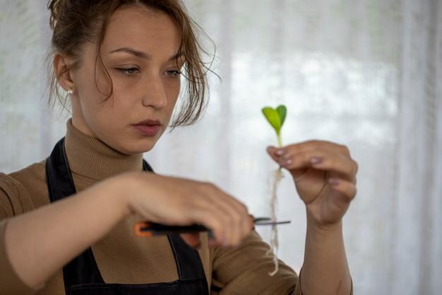Het vrolijke aantrekkelijke meisje snijdt de wortels van bloemspruiten alvorens te planten