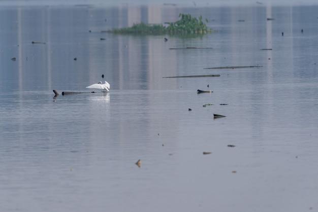 Het waterrijke park is ecologisch goed. vogels zoals zilverreigers jagen erop.