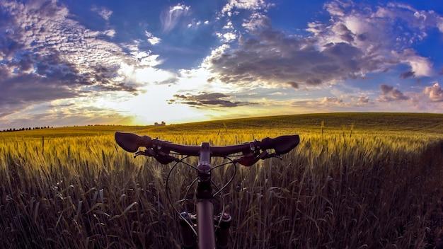 Het wiel van de wielrenner close-up tegen de achtergrond van een tarweveld in zonlicht