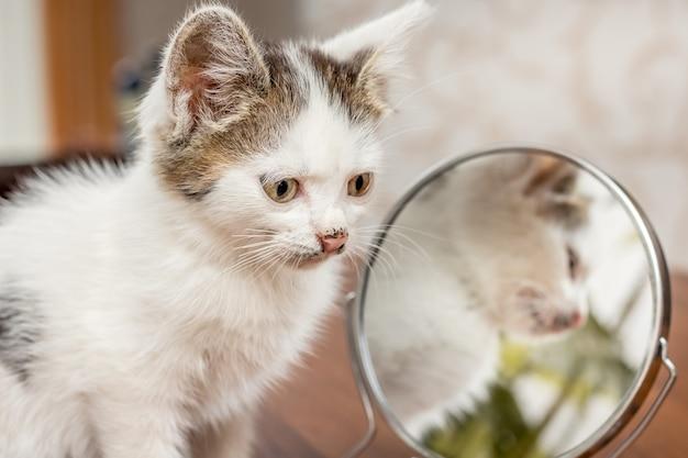 Het witte katje zit dichtbij de spiegel. in de spiegel wordt een kleine kitten weergegeven