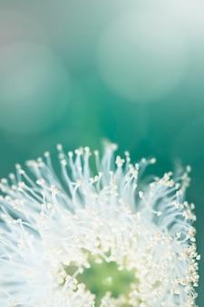 Het witte macroschot van het bloemstuifmeel