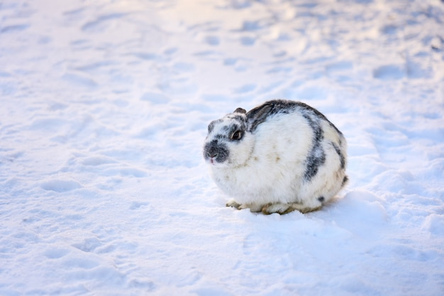 Het witte pluizige konijn zit op de sneeuwvloer
