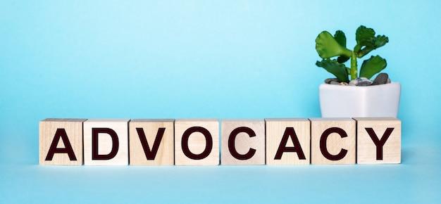 Het woord advocatie is geschreven op houten kubussen in de buurt van een bloem in een pot op een lichtblauwe achtergrond