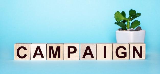 Het woord campaign staat op houten blokjes bij een bloem in een pot op een lichtblauwe muur