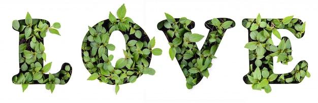 Het woord liefde van groene bladeren in een papieren stencil
