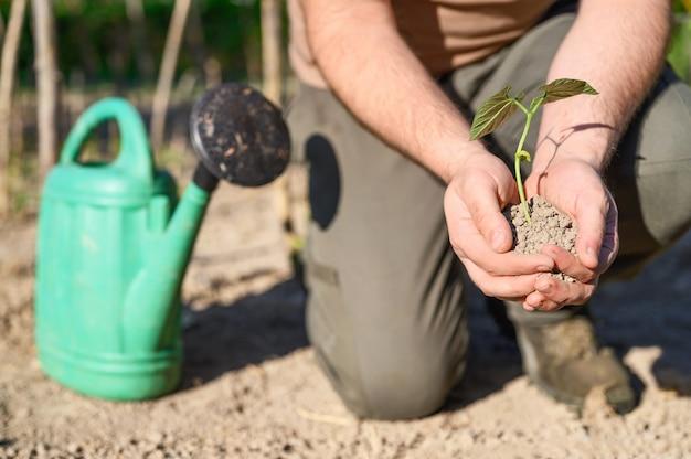 Het zaadboom van de mensenholding voor het planten in grond