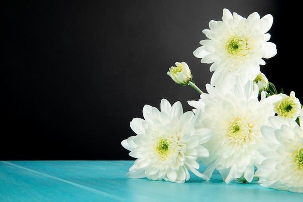Het zijaanzicht van het witte bloemen van de kleurenchrysant liggen geïsoleerd op zwarte achtergrond met exemplaarruimte