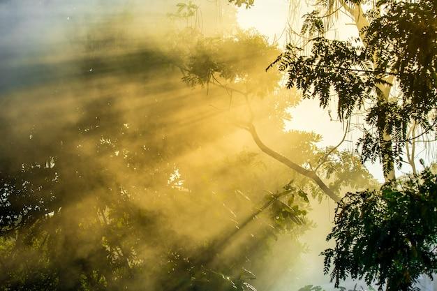 Het zonlicht van de late zomer breekt door de bomen