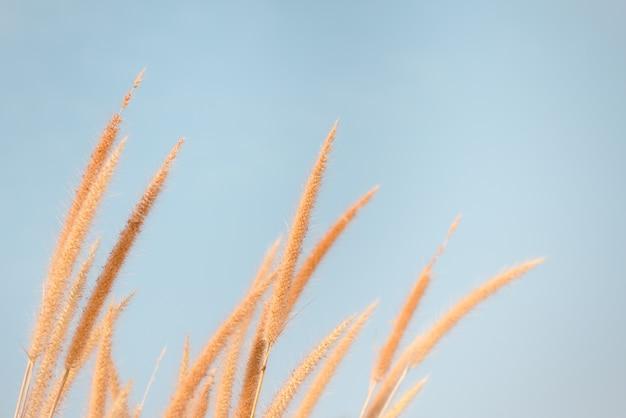 Het zonlicht van het het graseffect van de bloem in de herfst