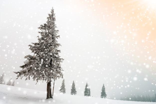 Het zwart-witte landschap van het nieuwjaarkerstmis van de de winterberg. alleenstaande lange spar bedekt met vorst in diepe heldere sneeuw
