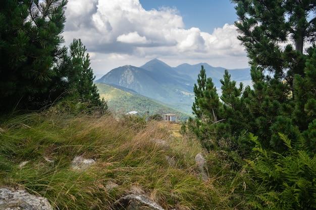 Heuvel bedekt met gras en evergreens met rotsachtige bergen