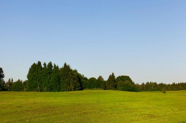Heuvelachtig gebied op een landbouwveld met groen gras, op de achtergrond groeit een bos, een zomers landschap