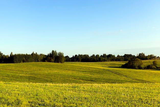 Heuvelachtige landbouwstrook met groene vegetatie en bomen aan de horizon