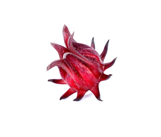 Hibiscus sabdariffa of roselle vruchten geïsoleerd op wit.