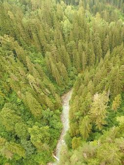 High-angle shot van een dennenbos met een stroom stromend water