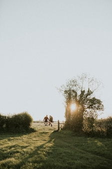Hipsterpaar zittend op een hek samen op het platteland