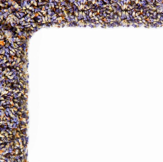 Hoek van bloemen van lavendel op witte muur