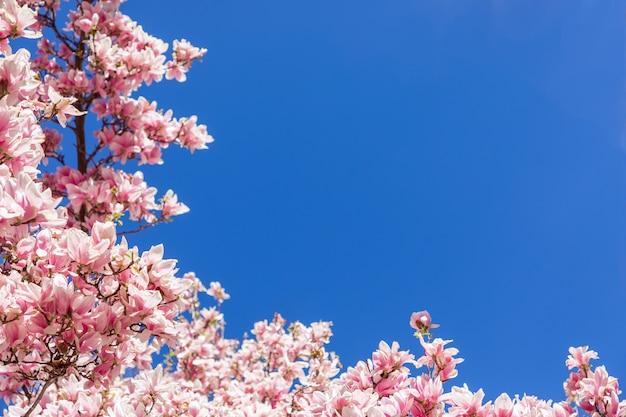 Hoekomlijsting met natuurlijke magnoliabloemen tegen de blauwe lucht (selectieve aandacht)