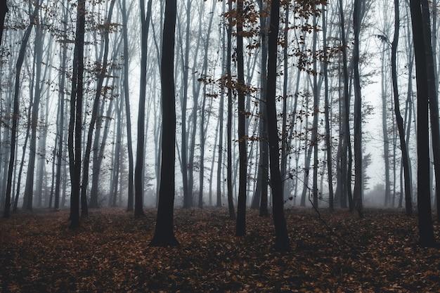 Hoge bomen in mist in bos