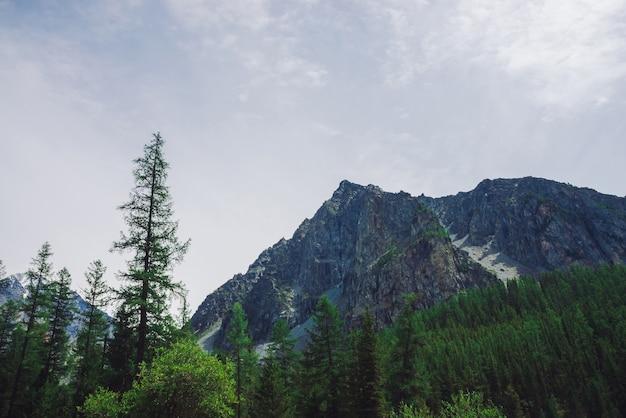 Hoge dennen tegen gigantische rotsachtige berg. grote steen. naaldbomen sluiten omhoog.