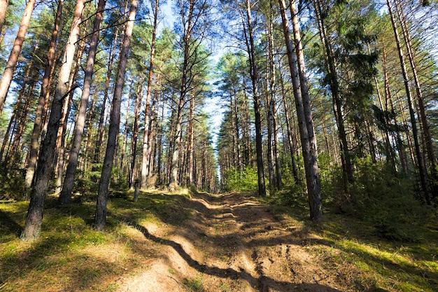 Hoge en lage boomsoorten groeien in een gemengd bos, het begin van het herfstseizoen van september