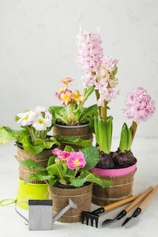 Hoge hoek bloeiende bloemen potten