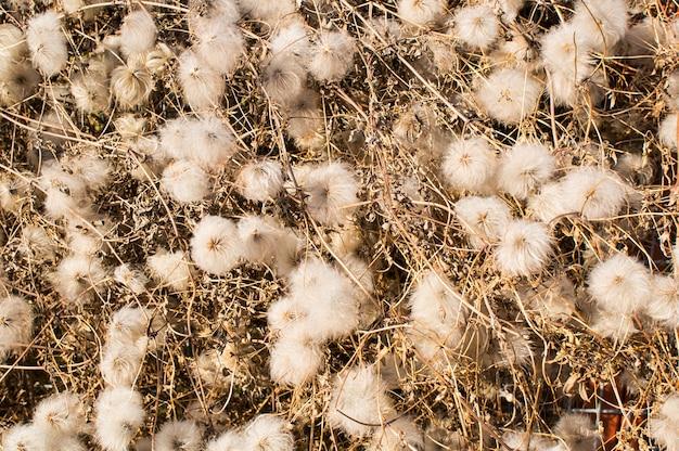 Hoge hoek close-up shot van witte wilde planten met droge stokken