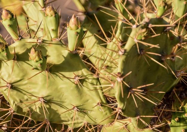 Hoge hoek die van cactus met stekelige doornen in het dessert is ontsproten