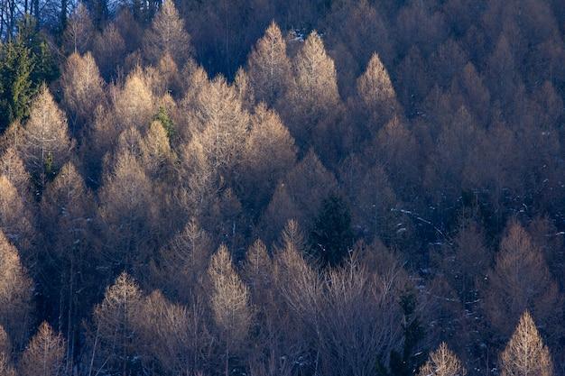 Hoge hoek die van de bomen van berg is ontsproten