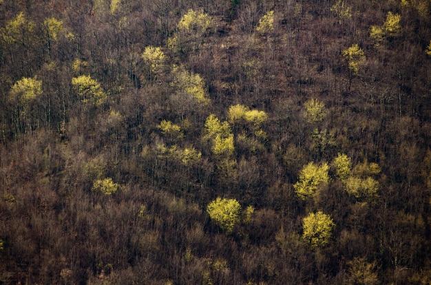 Hoge hoek die van de boomtexturen is ontsproten van het bos in istria in kroatië
