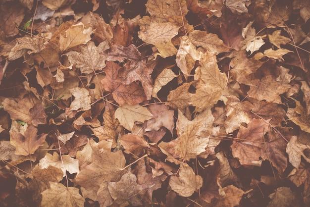 Hoge hoek die van droge bladeren ter plaatse in de herfst is ontsproten