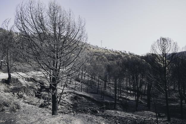 Hoge hoek die van een droog de winterbos is ontsproten dat met sneeuw wordt bedekt