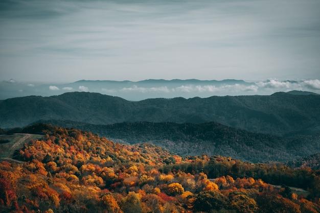 Hoge hoek die van een kleurrijk de herfstbos onder de sombere hemel is ontsproten