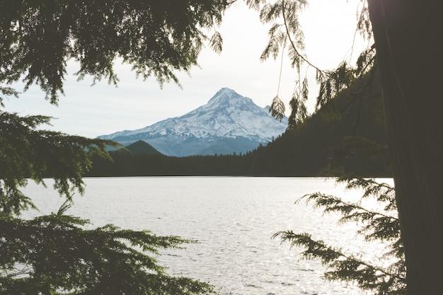 Hoge hoek die van een meer met een bos op de kust en een sneeuwpiek is ontsproten