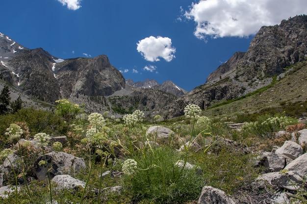Hoge hoek die van een natuurlijk gebied dichtbij de palisades-gletsjer bij big pine lakes, ca is ontsproten