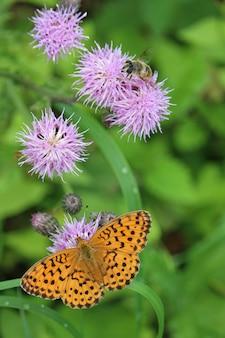 Hoge hoek die van een oranje vlinder op een distel is ontsproten