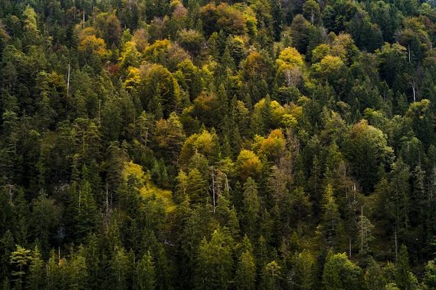 Hoge hoek die van een prachtig bos met herfstkleurige bomen is ontsproten